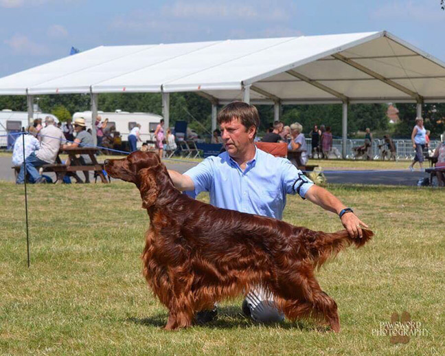 Irish Dog Show Results